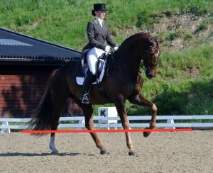 Hestefotografering - Billeder taget lidt nedefra giver ofte det bedste resultat.